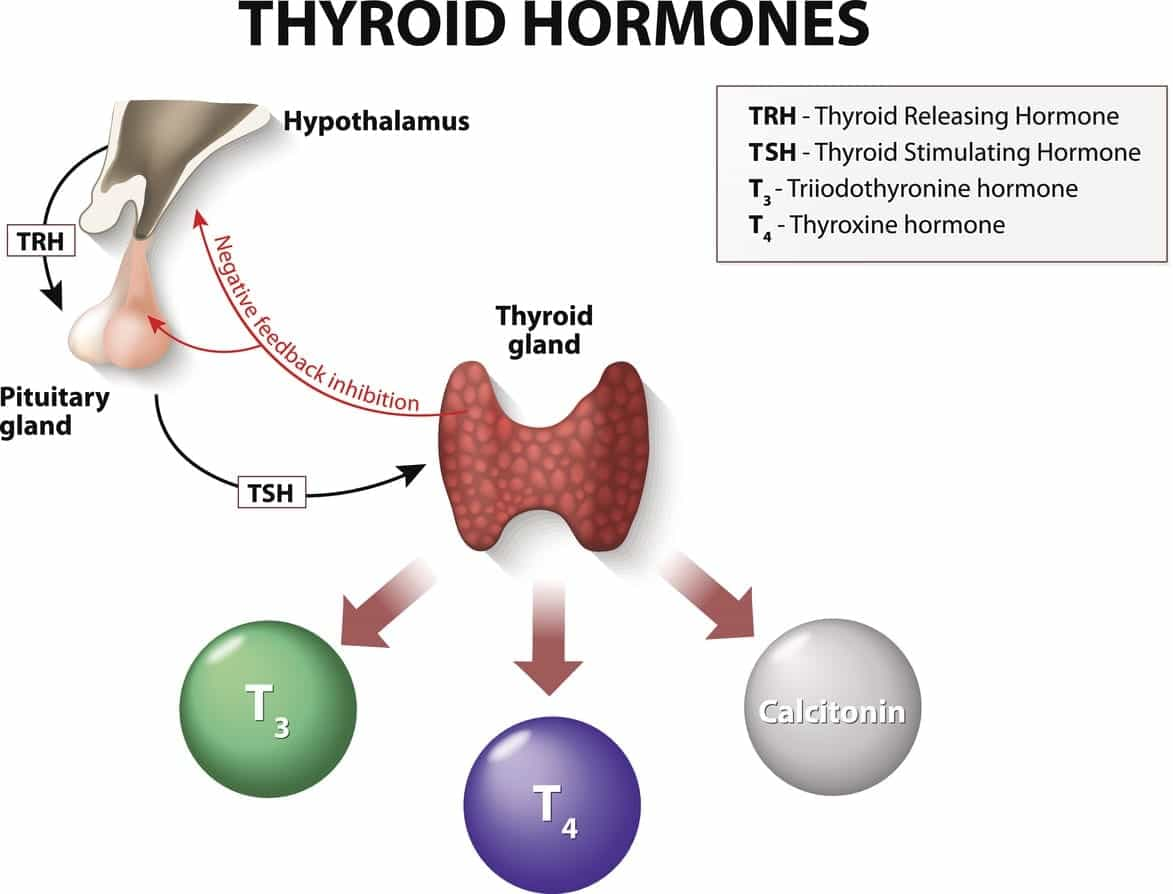 The Benefits And Side Effects Of Thyroid Medication Burt S Rx